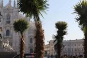 Перед Миланским собором появились пальмы