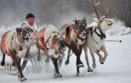 Зимний футбол и гонки на оленях – туристов приглашают на праздник Севера