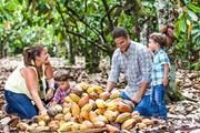 В Доминикане открылся музей какао и шоколада