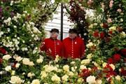 В лондонском Челси пройдет цветочное шоу