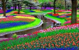 Парк «Кейкенхоф» в Нидерландах анонсировал дату открытия