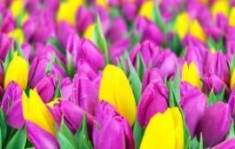Ботанический сад Санкт-Петербурга приглашает в весну