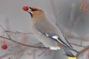 Пермский край приглашает понаблюдать за птицами
