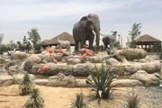 В Дубае открылся сафари-парк