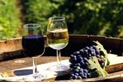 В Крыму появятся винные деревни для туристов