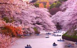 Визы в Японию будут выдавать по новой системе