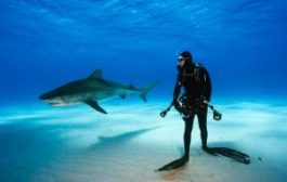 Туристов предупредили об акулах в Сиамском заливе