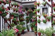 Туристам открыли самые красивые дворики Кордовы