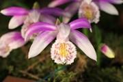 В Вологде открывается Музей орхидей