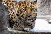 Московский зоопарк продлил часы работы до 22:00
