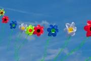 Фестиваль воздушных змеев пройдет в Краснодарском крае