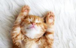 Сколько стоит взять котика в аренду