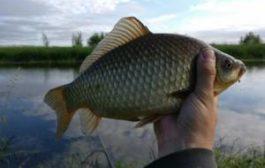Карася, конечно, жалко, но рыбалка есть рыбалка