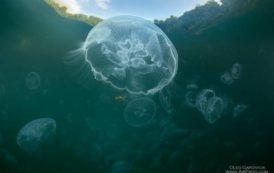 Залив медуз, Раджа-Ампат, Индонезия