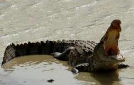 На пляжах Пхукета больше не купаются. Там ловят крокодила