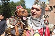 В Польше пройдет костюмированный Парад такс