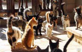 На Кипре начинают кормить котов в специально оборудованных местах