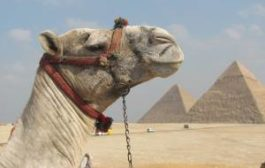 Египет не сомневается насчет чартерных перевозок из России в Шарм-эль-Шейх
