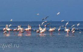 Где на Джербе посмотреть фламинго